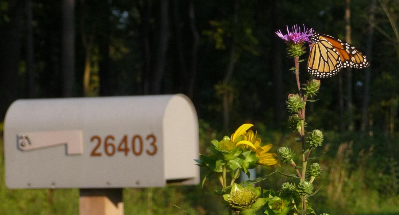 ButterflyMailbox