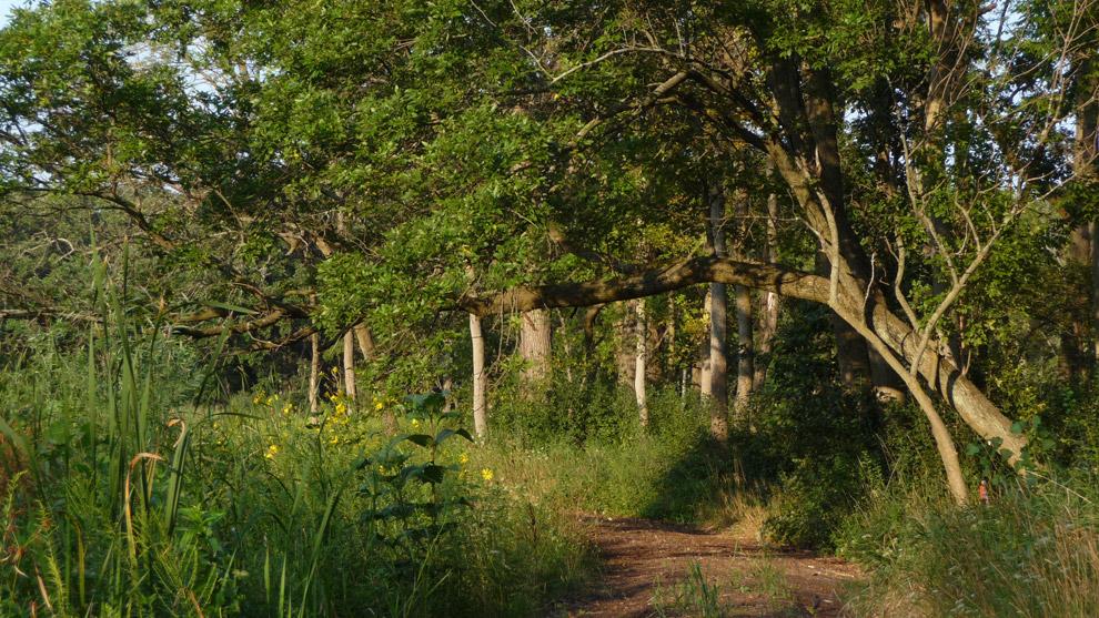Wetland trail