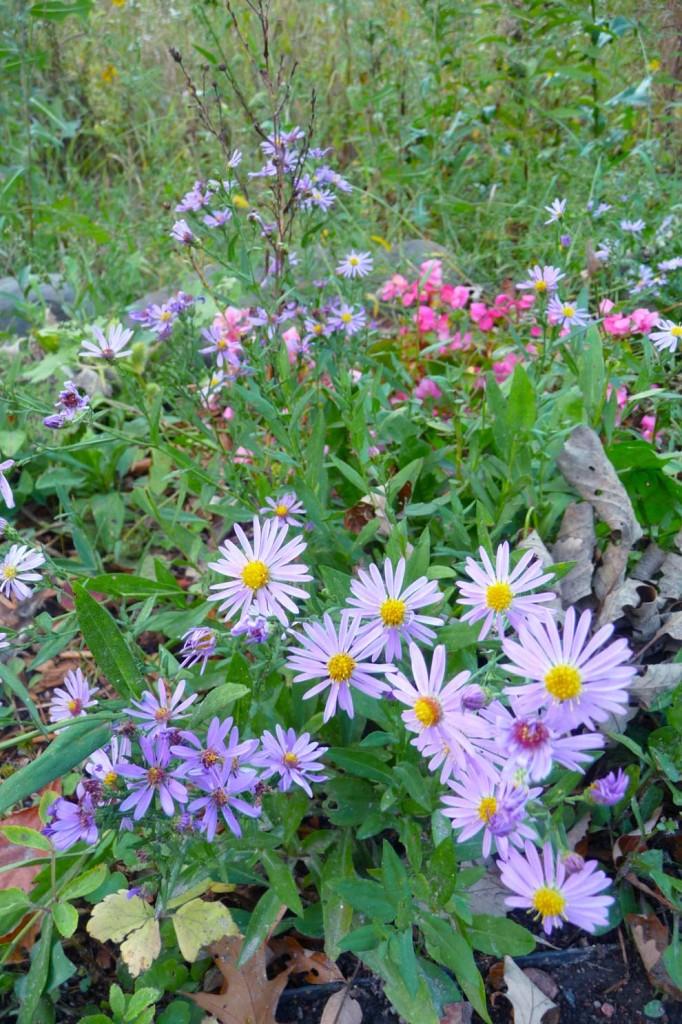 990px_GardenFlowers_P1040107