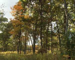 Lot 8: 26067 Farwell Road